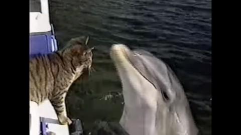 Dolphin1-480x269