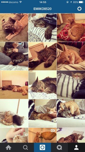 henka_cat02-576x1024