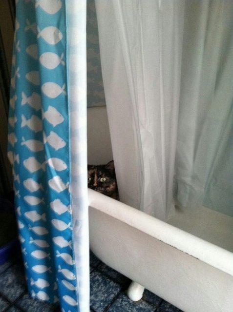 henka_cat03
