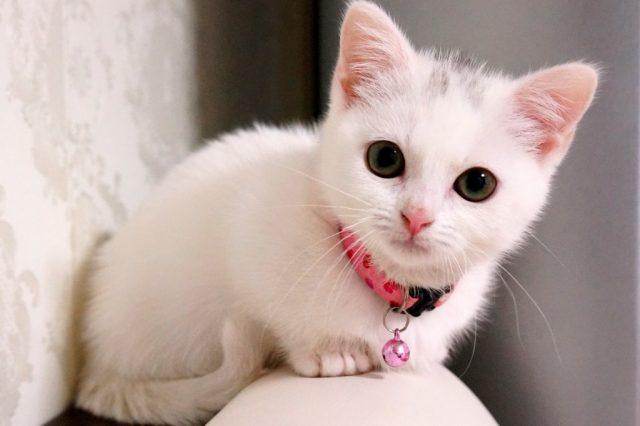 henka_cat19-1024x682