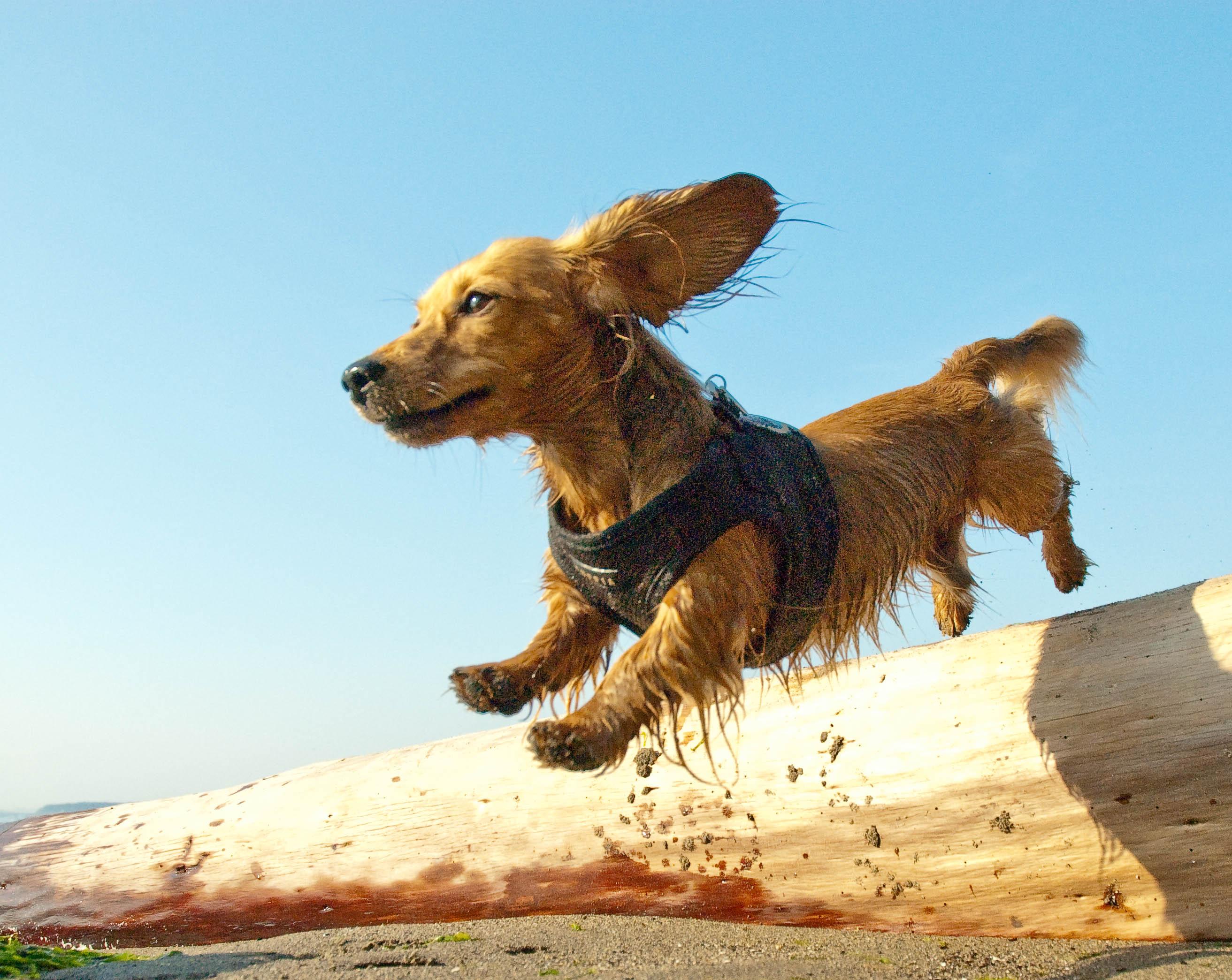 衝撃の新事実!犬の8割は抱っこすると不快感と○○を感じていることが判明