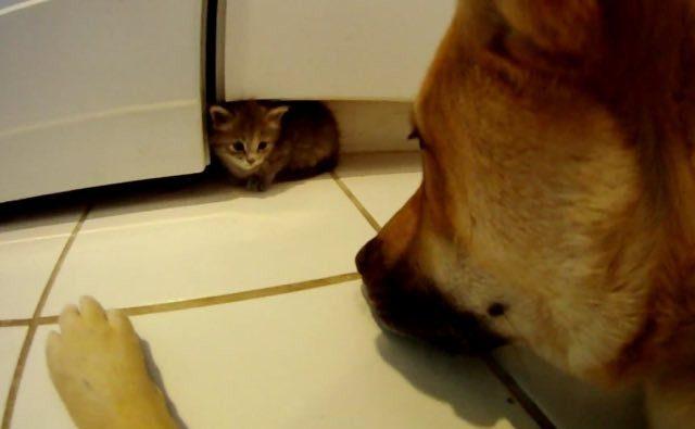 dog_cat022
