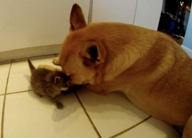 dog_cat042